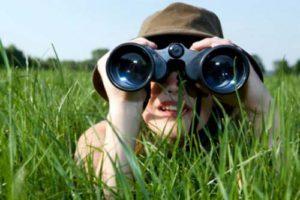 Best Binoculars for Bird Watchers