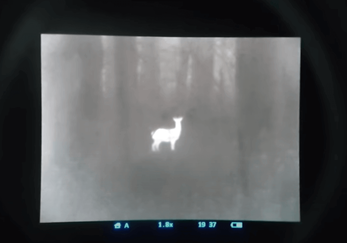 animal in a thermal imager